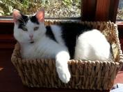 Cat in Basket Glass Worktop Saver - 39.5 x 28cm