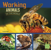 Working Animals of the World (First Facts