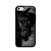 Black and White Photo of Labrador TPU RUBBER SILICONE Phone Case Back Cover iPhone 5 5s
