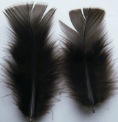 Brown Turkey Plumage Craft Feathers - Mini Pkg