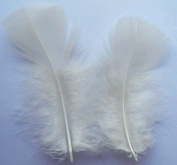 Ivory Turkey Plumage Craft Feathers - Mini Pkg