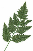 24 Artificial Silk Green Fern Leaf Picks for Floral Arranging, Crafting and Creating