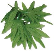 Beistle 57410 12-Pack Tropical Fern Leaf Wristlet/Anklet, 25cm