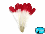 Turkey Quills - 0.1kg Half Dipped Turkey Feathers, Red