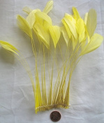 Stripped Coque Feathers, Pack of 25, MANY colour OPTIONS, Millinery and Crafts - by Lamplight Feather, Inc.