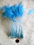 Stripped Coque Feathers, MANY colour OPTIONS,Pack of 25, Millinery and Crafts - by Lamplight Feather, Inc.