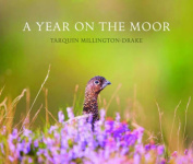 A Year on the Moor