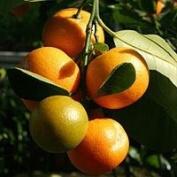 Summer Citrus Premium Fragrance Oil, 120ml Bottle