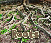 All About Roots (Acorn