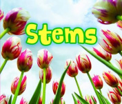 All About Stems (Acorn