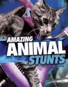 Wild Stunts Pack A of 4 (Edge Books