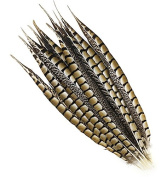 5 Pcs Lady Amherst Pheasant Tails 25cm - 41cm Natural Side Feathers