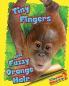 Tiny Fingers and Fuzzy Orange Hair (Orangutan)