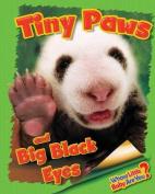 Tiny Paws and Big Black Eyes (Giant Panda)
