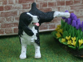Dolls House Miniature 1:12th Scale Naughty Spaniel