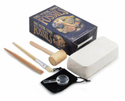 Dig Your Own Fossils Kit - Large