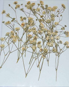 LoveDiyLife White Flower with branch real pressed dried flowers