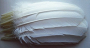 White Turkey Quill Feathers - By the Dozen - Curved Right