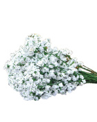 SAMGU Lifelike Artificial Flower White Artificial Silk Flowers Baby's Breath Gypsophila Plants For Wedding Party Decoration DIY Home Garden 10PCS/lot