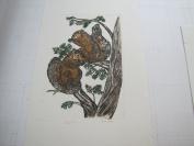 Squirrels Etching By Brannagan