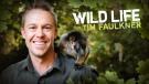 The Wild Life of Tim Faulkner [Region 4]