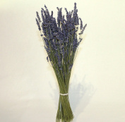 Dried Lavender bunch approx 200 stems height 40cm weight 100g