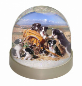 Border Collie in Wheelbarrow Snow Dome Globe Waterball Gift
