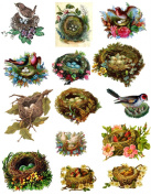 Victorian Birds and Nests 101 Collage Sheet