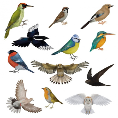 12 Brilliant Bird Window Clings by Articlings® - 11 Different Birds & 1 Owl - Non-adhesive Stickers - Quickly Decorate and Brighten your Windows
