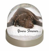 Chocolate Labrador Dog Love Snow Dome Globe Waterball Gift