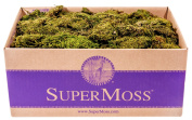 SuperMoss (21754) Sheet Moss Petite (Small Pieces) Dried, Fresh Green, 1.4kg