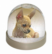 Chihuahua Snow Dome Globe Waterball Gift