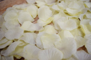 Beige / Ivory Silk Rose Petals Confetti for Weddings in Bulk by PaperLanternStore