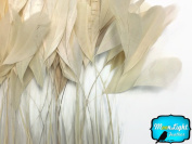 Moonlight Feather, Coque Feathers - Ivory Stripped Coque Tail Feathers - 1 Dozen