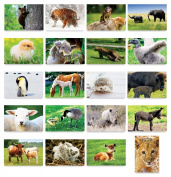 BABY ANIMALS postcard set of 20 postcards. Animal babies post card variety pack. Made in USA.