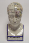 """Phrenology head with bust - brain acc. to Fowler - porcelain - 11.8"""""""
