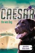 Caesar the War Dog 5