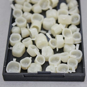 New Dental Temporary Crown Material for Molar Teeth with High Quality 1 Box