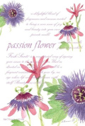 Fresh Scents Passion Flower Scented Sachet 115ml