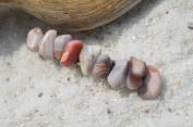 Botswana Pink Agate Stone French Barrette Hair Clip