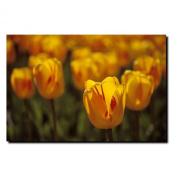 Trademark Fine Art Tulips on Fire by Kurt Shaffer Canvas Wall Art, 36cm x 48cm
