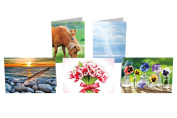 Avanti Press Greeting Card Collection 10-Count, Blank