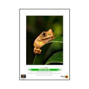 PermaJet 51102 15cm ×10cm 240g Digital MattPlus Paper