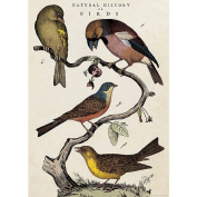 Cavallini & Co. Natural History Birds Decorative Decoupage Poster Wrapping Paper Sheet. Pack of 5
