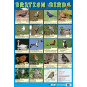 BRITISH BIRDS - Garden & Wetland Birds Educational Poster