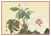 Tanigami Konan Asian White Peony Flowers Counted Cross Stitch Chart Graph