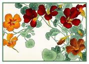 Tanigami Konan Asian Nasturtium Flowers Counted Cross Stitch Chart Graph