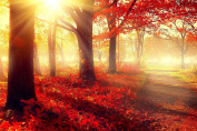 Daydream Red Morning in the Forest Canvas Wall Art, 5 Stars Gift Startonight 60cm x 90cm