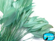 Coque Feathers, 1 Dozen Teal Stripped Coque Tail Feathers