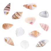 Tiny Miniature Fairy Garden Beach Critter Seashells Marine Life Collection for Arts & Crafts Projects, Decorations, Party Favours, Invitations (2 Tbsp Pack) by Super Z Outlet®